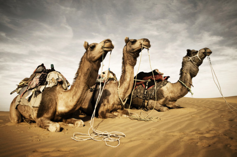 Camel skin products